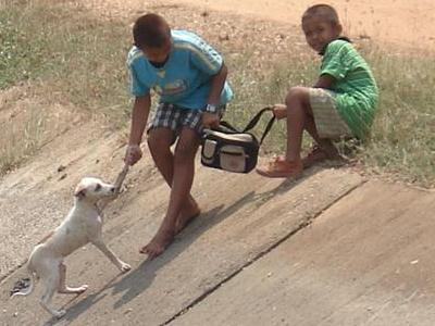 愛と勇気と犬の救助04