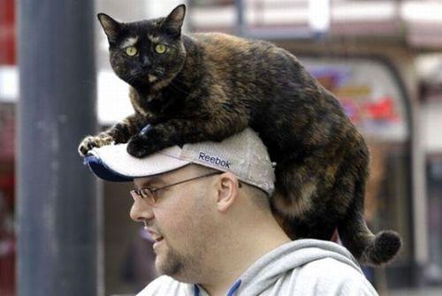 猫を頭乗せ12