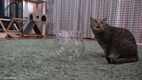 金魚鉢に入りたかった01