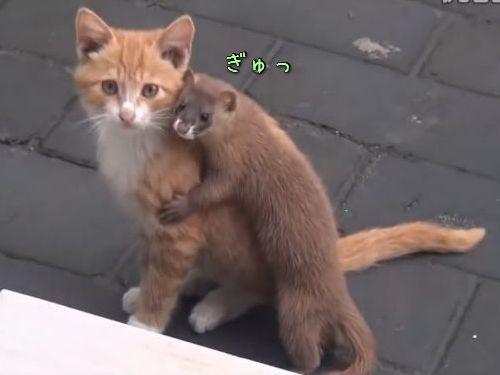 猫とイタチ00