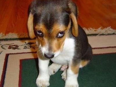 引き取り手のないかわいそうな犬