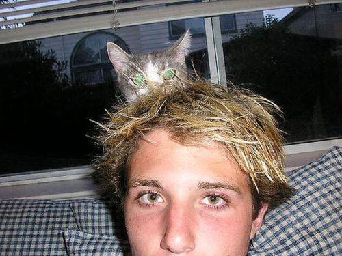 猫を頭乗せ07