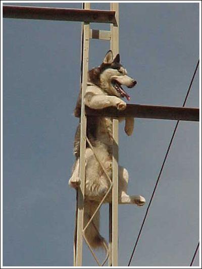 犬と煙は高い所へ登りたがる01