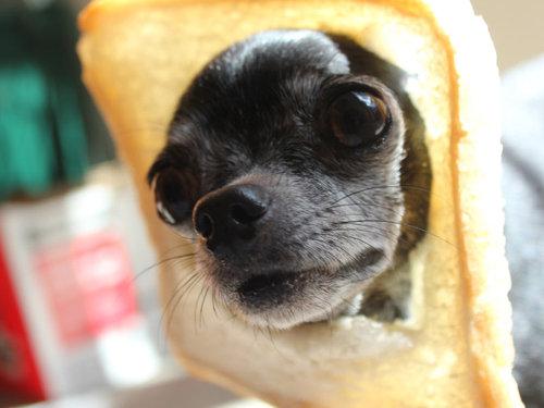 犬とパンの耳08