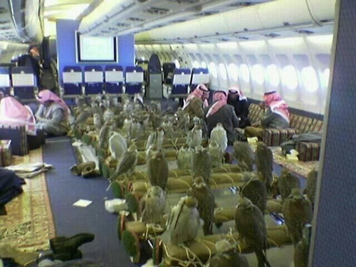 80羽のタカのために飛行機80席を購入02