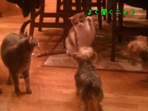 密談する猫たち00