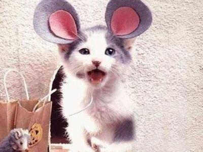 猫コスプレ00