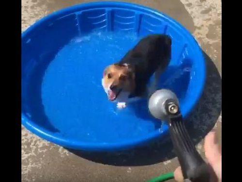 コーギー犬が新しいプールの遊び方06