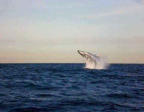 クジラウォッチング04