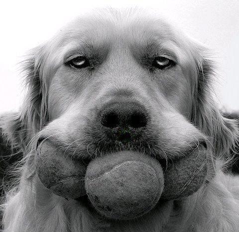 犬の表情13