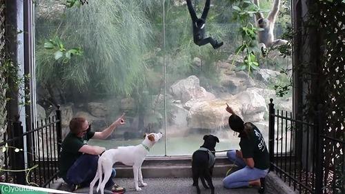 犬や猫が動物園を訪れる02