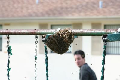 「家にハチの巣が…」素人が繰り広げたムチャな死闘04