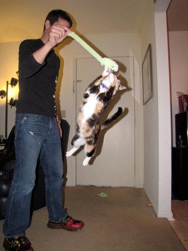 すごい猫05
