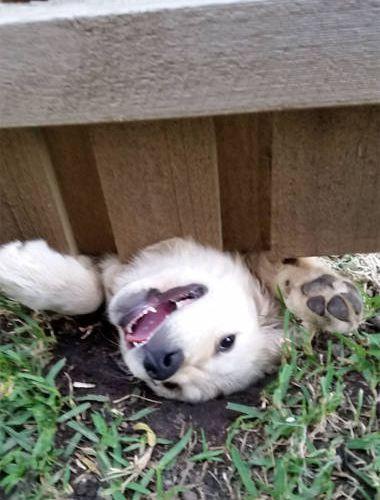 壁越しに会いたがる犬たち10