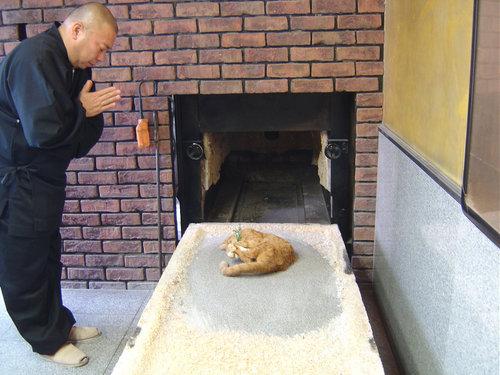 日本で猫の仏葬を体験した05