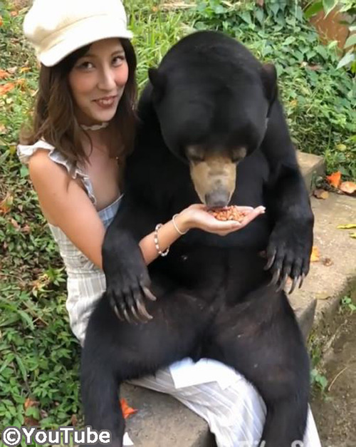 バリ島には人懐っこいマレーグマがいるらしい02