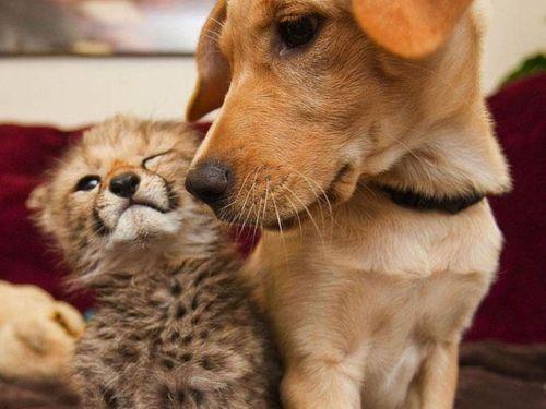 チーターと犬