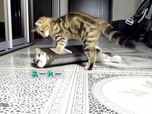 猫から学ぶ、彼氏としてのふるまい06