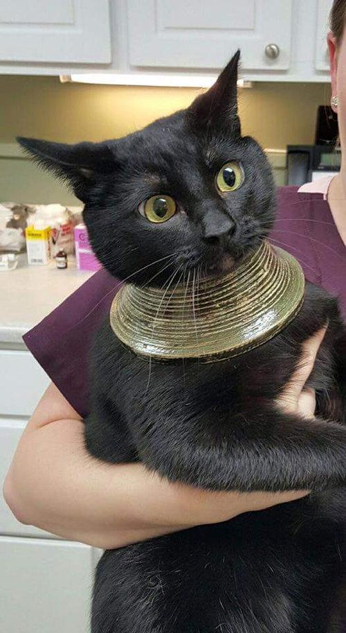 花瓶に猫が頭を突っ込むと01