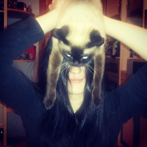 猫でバットマン05