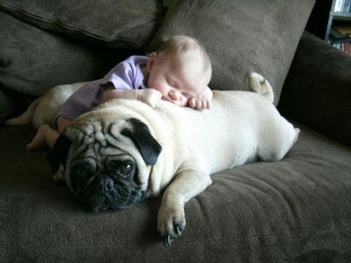 ペットと赤ちゃん11