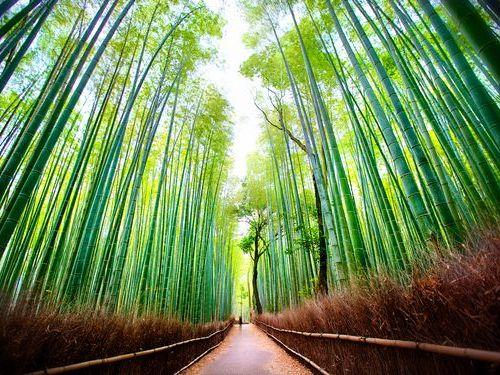 嵐山の竹林00