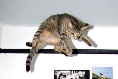 猫ジャンプ06