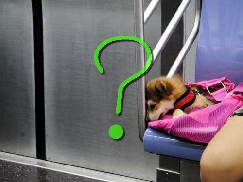 ニューヨークの地下鉄と犬00