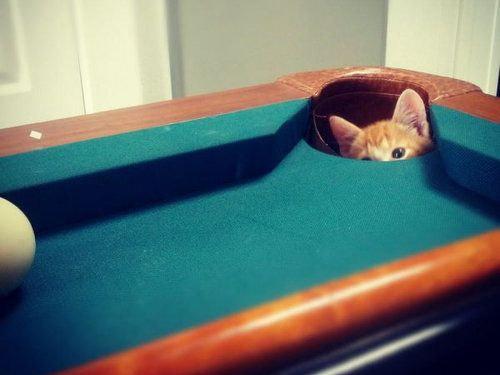 猫は見ている23