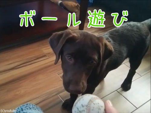 マイペースな犬のボール遊び00