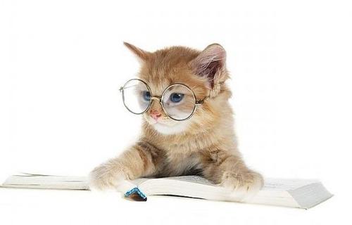 メガネ猫06