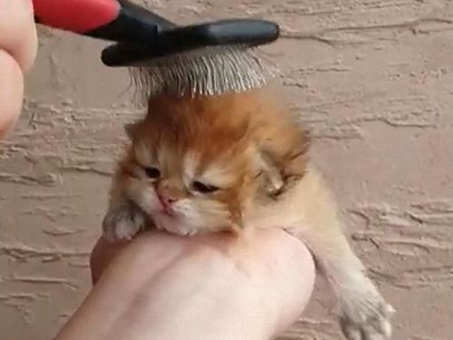 子猫の整髪02