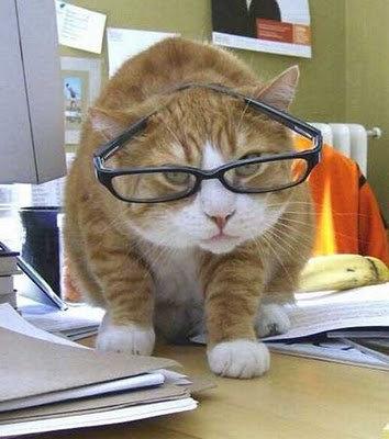 02メガネやサングラスをかける動物たち