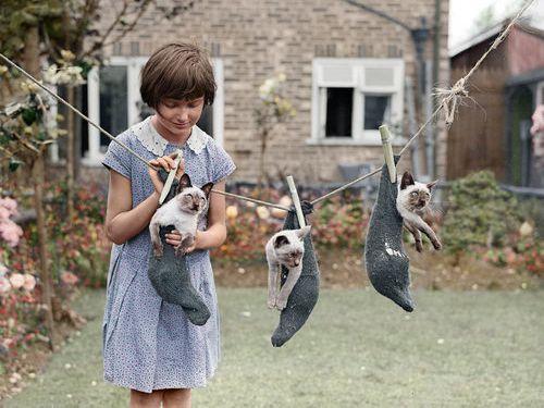 1931年の写真をカラー化「少女と猫」01