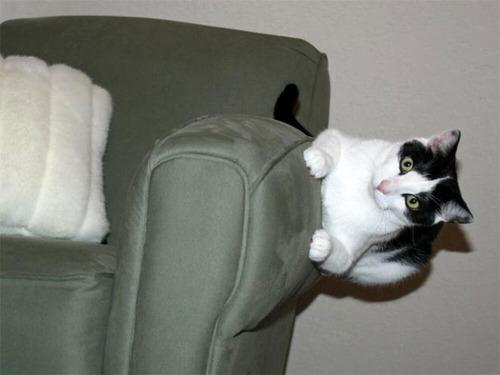 重力を無視する猫06