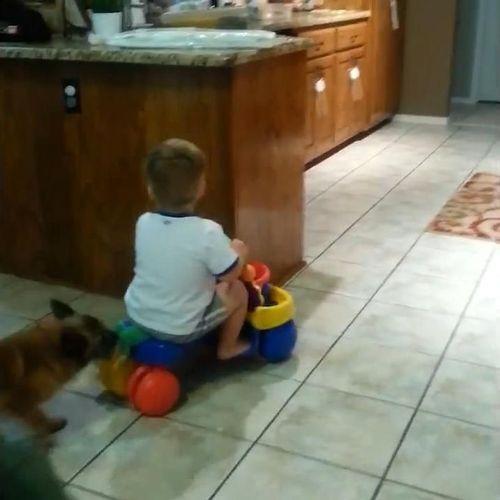 赤ちゃんをフェッチする犬06