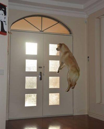 犬の決定的写真08