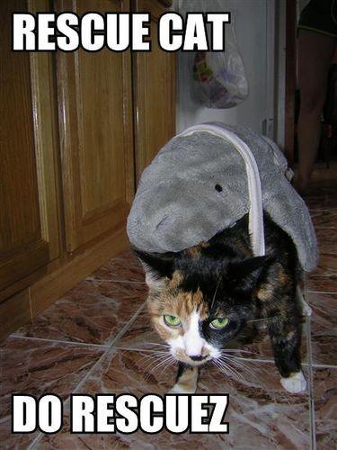 サメ猫01