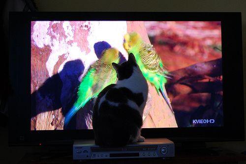 インコと猫13