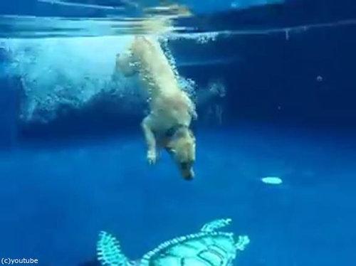フリスビー犬02