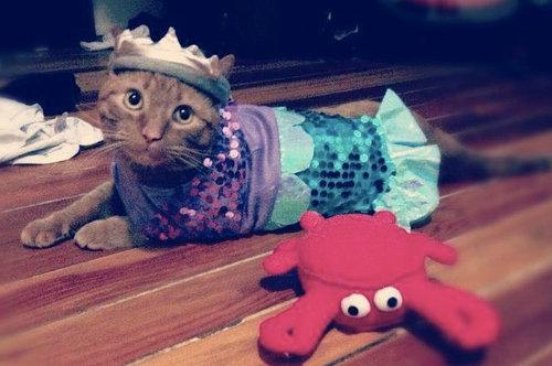 人魚猫02