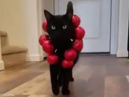 猫のファッションショー06