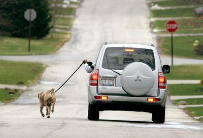 確かに楽だろうけど、それでいいのか、な犬の散歩