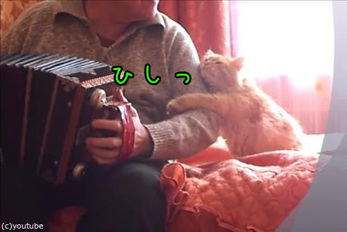 アコーディオンと猫00