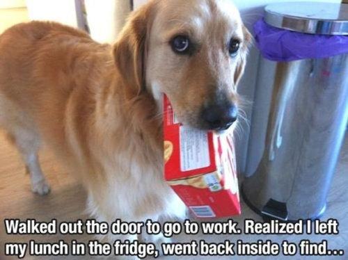 犬の飼い主ならわかること 036