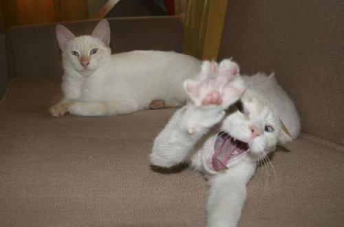 猫のハイタッチ10