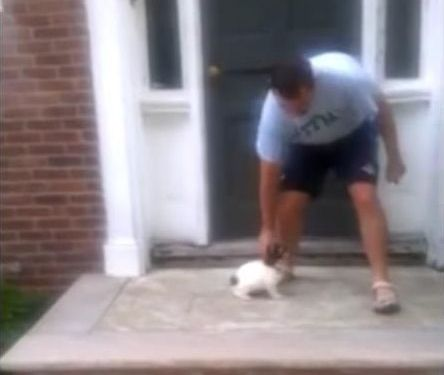 階段が怖い子犬…まさかの方法01