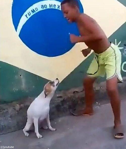 ブラジルは犬だってカーニバル01