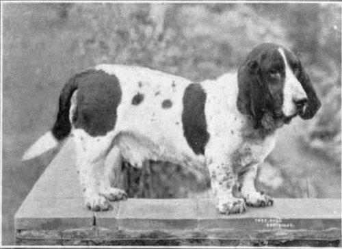 犬種は100年でこう変わった15