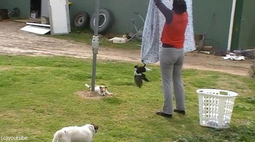 鳥と犬は親友になりうる09
